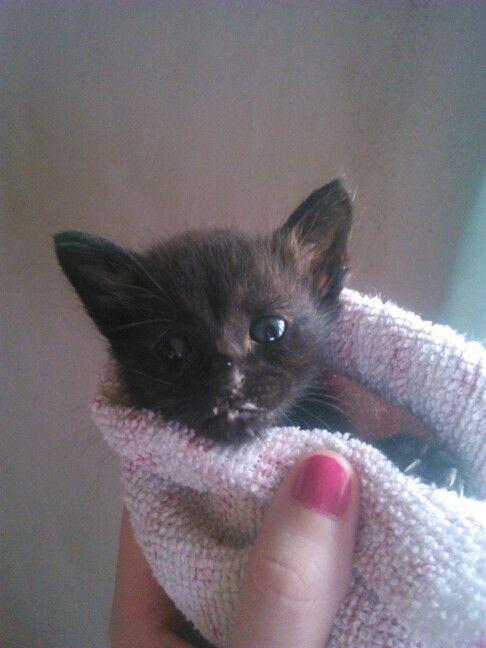 Bebe gatito