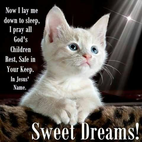 Now I Lay Me Down To Sleep I Pray All God S Children Rest Sweet Dreams Good Night Images Good Night Say Good Night I Love You Good Night Cat Good Night
