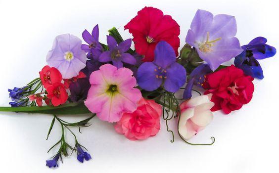Fotografia hermoso ramillete de flores  [16-8-15]: