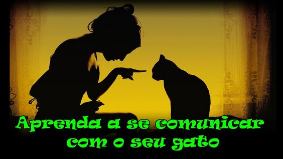 Aprenda a se comunicar com o seu gato. #20
