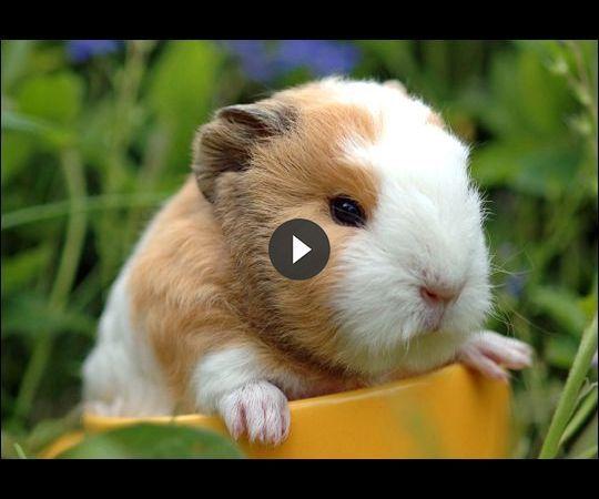 Pin On Save Animals