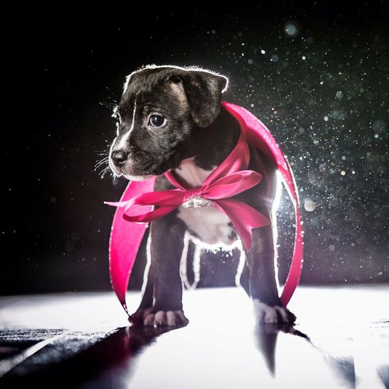 So cute, super pup!