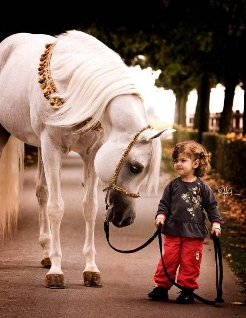 Loyalty and trust.: Beautiful Horses, Arabianhorses Ahya, Beautiful Arabian Horses, Horses Deserve, White Horses, Arabian Stallions, Children Photography