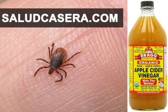 C mo eliminar las garrapatas pulgas y otros insectos de for Como combatir las garrapatas en el jardin
