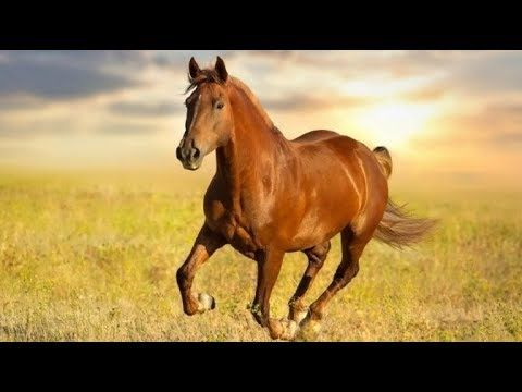 رؤية الحصان في الحلم Horses Horse Names Animals