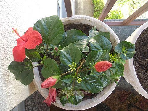 Viva o seu dia como um vaso de planta, exiba suas flores como gentileza e seja feliz. Tenham um belíssimo dia.  Go about your day as a potted plant, display their flowers as kindness and be happy. Have a wonderful day.