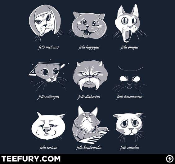 LOLcat taxonomy