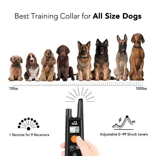 Dog Training Collar Rechargeable Dog Shock Collar W 3 Training
