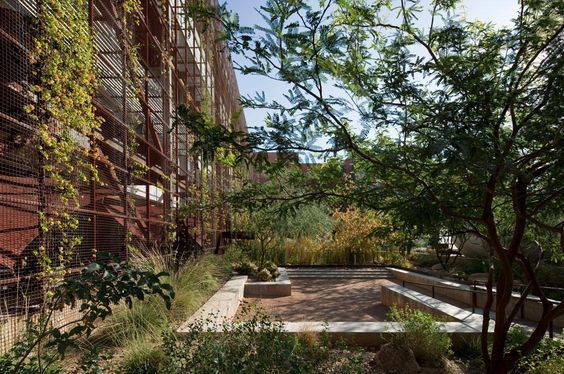 Underwood Family Sonoran Landscape Laboratory by Ten Eyck Landscape Architects, Inc.: Image 2 of 14