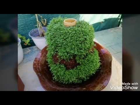 زراعة حب رشاد على فخار او كربة ماء منضر رائع لزينه جربوها Youtube Herbs Food