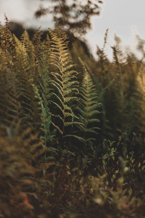 kellyelainesmith: + kelly smith photography