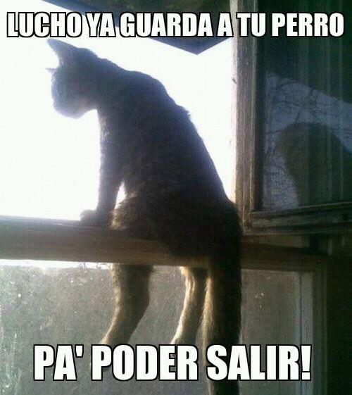 Memes Chistosos De Gatos Y Perros 23 Gatos Sentados Gatos Perro Gato