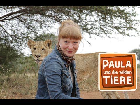 Wie Die Lowen Leben Doku Reportage Fur Kinder Paula Und Die Wilden Tiere Youtube In 2020 Wilde Tiere Tiere Jungtiere