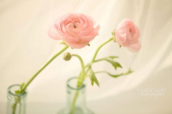 veredit-iertes - photographic - poems : Harmony ... the bath