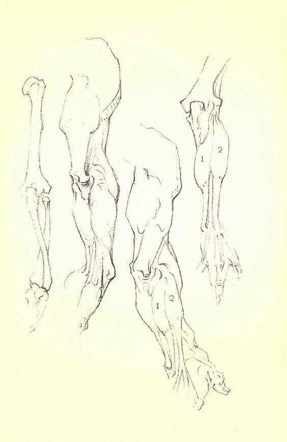 Constructive Anatomy by George Bridgman | Scribd