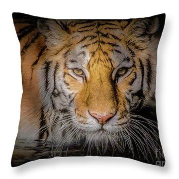 Inspirational Stylish Decorative Pillows
