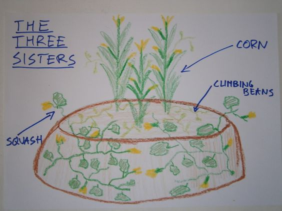 gardening with plant guilds or groups.  Permaculture website!