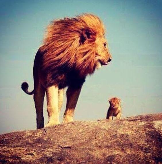 Moufassa & Simba