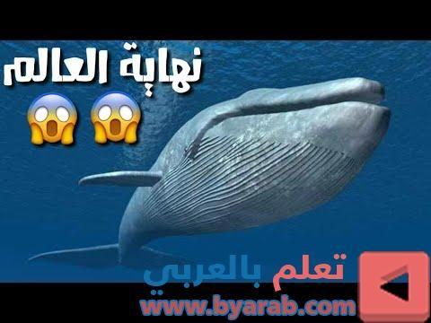 ظهور الحوت الازرق في مصر نهاية العالم احباب القلب Whale Animals