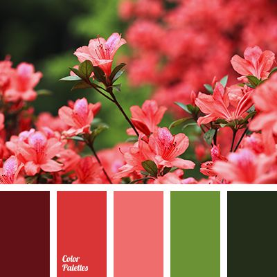 alizarin red color, burgundy color, color combinations ...