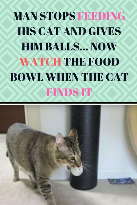 Man Stops Feeding His Cat And Gives Him Balls Now Watch The Food Bowl When The Cat Finds It Cat Safe Plants Cats Cats And Kittens