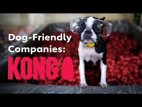We Ve Gathered A List Of Our Favorite Products And Recipes To Fill Your Dog S Kong Toy In This Kong Stuffing Guide Get Ready To M In 2020 Dog Friends Dog Minding