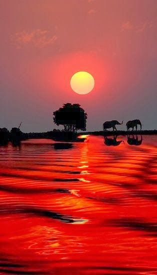 Stunning Elephant Sunset, Botswana by Michael Sheridan