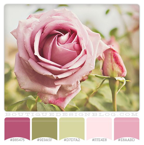 green and pink garden color palette | Rose Garden color scheme with pinks and greens | Boutique Design ...