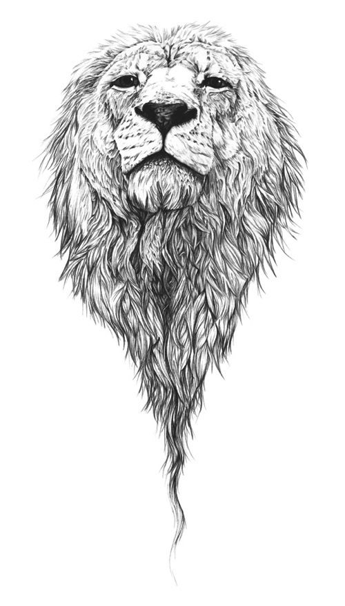 Lion Face Outline Tattoo My Idea For A Back Piece Head Showing