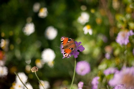 #butterfly enjoys the last throes of summer