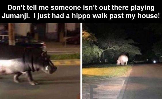 After Dark Funny Meme Dump 34 Pics