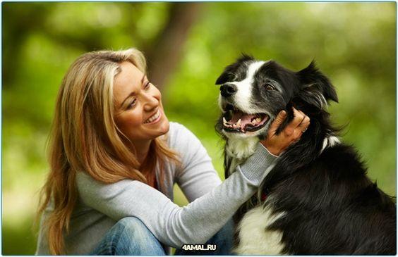 #собака #собаки #любовь #любить #любимые #спорт #душа #время #россия #серпухов #москва #животные #колли #лабрадор #природа #animals #dogs #dog #animal #russia #sport #love #time #moskow #retriever