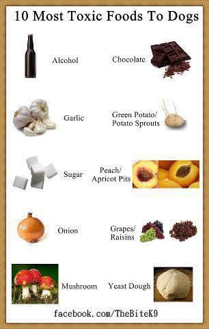 Ten most toxic foods for dogs