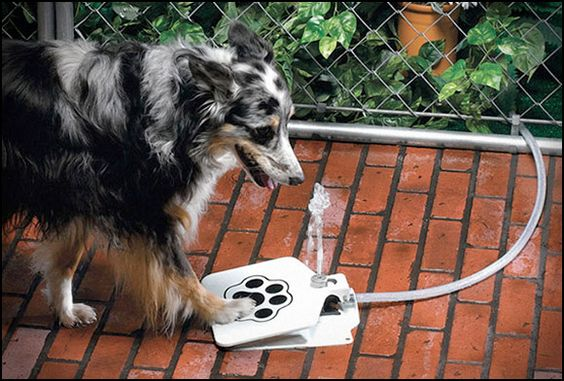 My pup BUDDY would be entertained by this    API Doggie Fountain F-1 (http://goo.gl/02mf1)