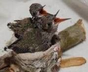 Humming Birds (@ wrc)