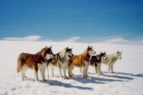 My Storm is the last one in line! Eight Below. One of my favorite movies EVER!