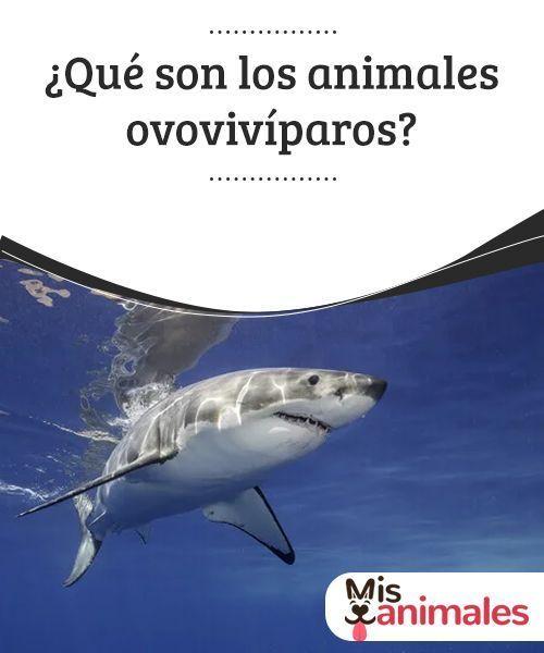 Que Son Los Animales Ovoviviparos Animales Especies De