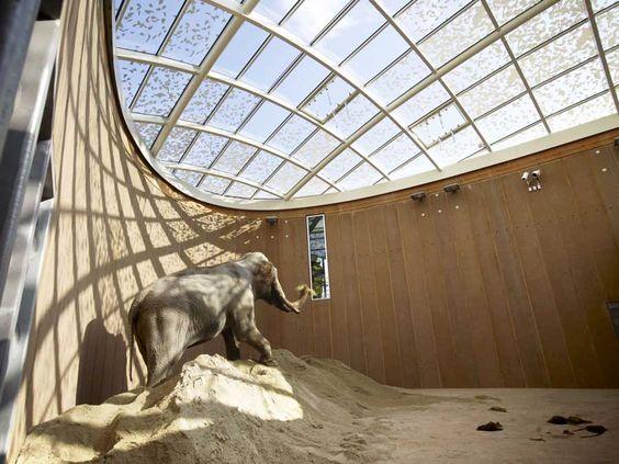 elephant house foster