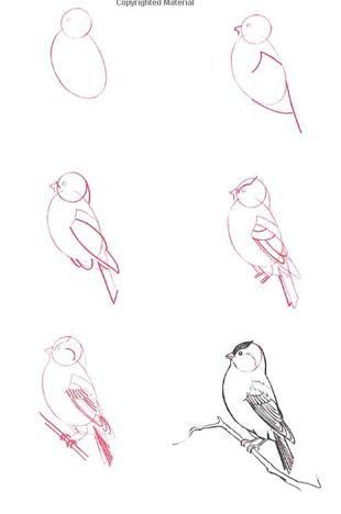 how to draw a really good person step by step