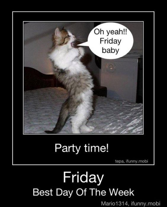 Funny Pictures About Friday: Oh Yeah Its Friday Kitten