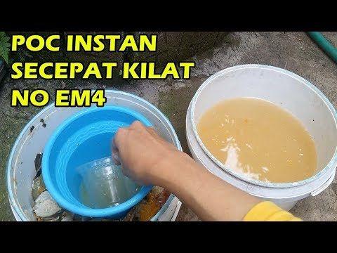 Tis Pupuk Organik Cair Subur Pocs Instan No Em4 Molase Mudah Murah Meriah Cabe Tomat Durian Youtube Pupuk Organik Molase Tanaman