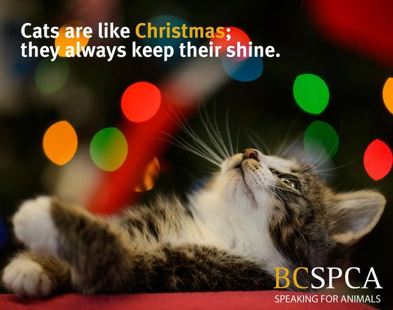 The BC SPCA provincial office will be closed December 25, 28 and January 1. Please note that over the holidays we might not be able to respond as promptly to questions and comments on social media. Thank you for your understanding! We look forward to connecting with you again on Tuesday.  We wish you and your fur babies a bright and merry holiday!