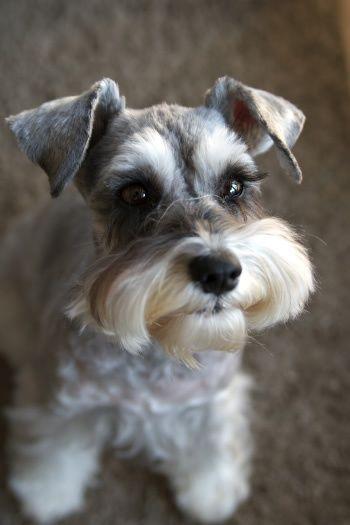 Breed Of Dog With Few Eyelashes