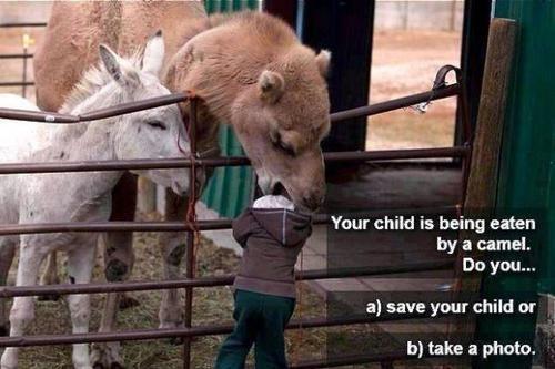 hilarious animal memes   meme animal funny meme camel camel meme funny haha