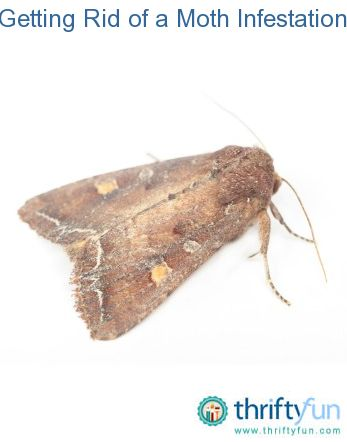 Moth And Home On Pinterest