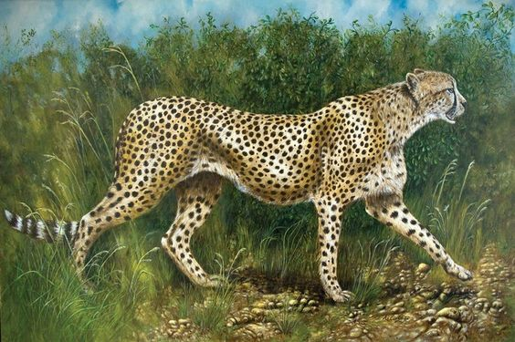 ARTFINDER: Cheetah on the run by Anne Corless - Years ago, I followed this cheetah and her cubs in a game park in Kenya until the light failed and the ground became too rocky to continue over. It was a da...