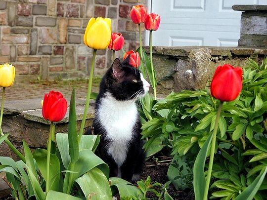 Cat from Zaventem, Belgium