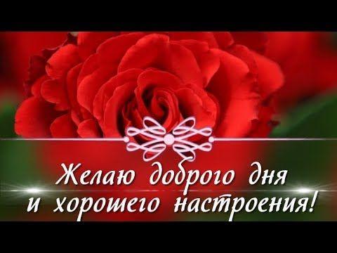 5 Zhelayu Dobrogo Dnya I Horoshego Nastroeniya Krasivoe Pozhelanie