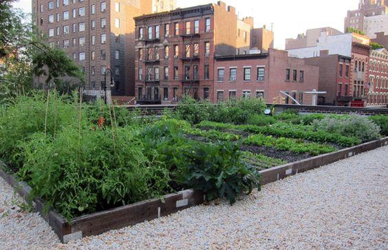 minha horta urbana