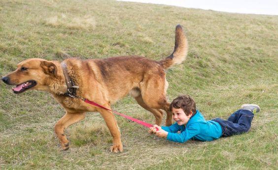 Die fünf größten Erziehungsfehler bei Kind und hund